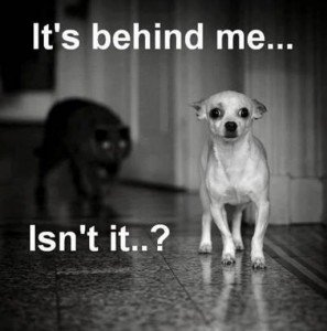 scaredpup